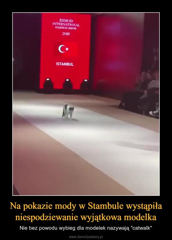 """Na pokazie mody w Stambule wystąpiła niespodziewanie wyjątkowa modelka – Nie bez powodu wybieg dla modelek nazywają """"catwalk"""""""