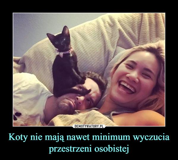 Koty nie mają nawet minimum wyczucia przestrzeni osobistej –