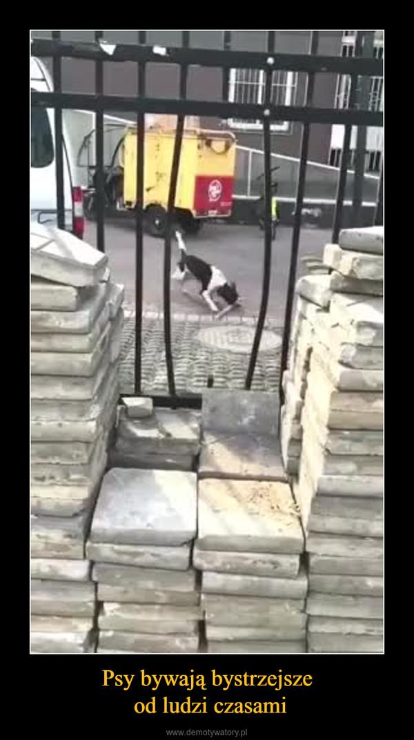 Psy bywają bystrzejsze od ludzi czasami –