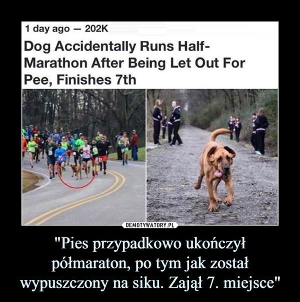 """""""Pies przypadkowo ukończył półmaraton, po tym jak został wypuszczony na siku. Zajął 7. miejsce"""" –"""