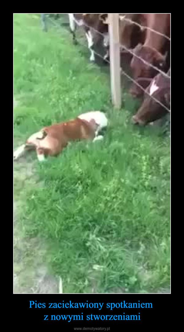 Pies zaciekawiony spotkaniem z nowymi stworzeniami –