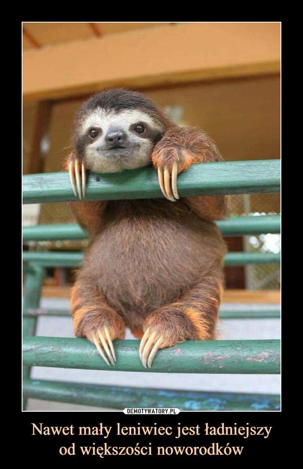 Nawet mały leniwiec jest ładniejszyod większości noworodków –