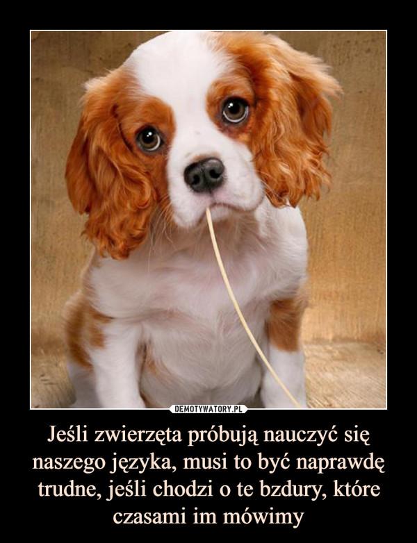 Jeśli zwierzęta próbują nauczyć się naszego języka, musi to być naprawdę trudne, jeśli chodzi o te bzdury, które czasami im mówimy –