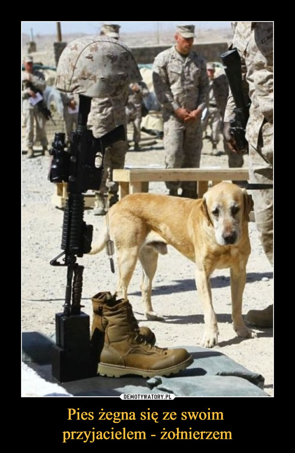 Pies żegna się ze swoim przyjacielem - żołnierzem –
