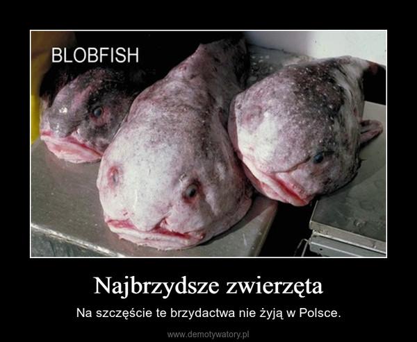 Najbrzydsze zwierzęta – Na szczęście te brzydactwa nie żyją w Polsce.