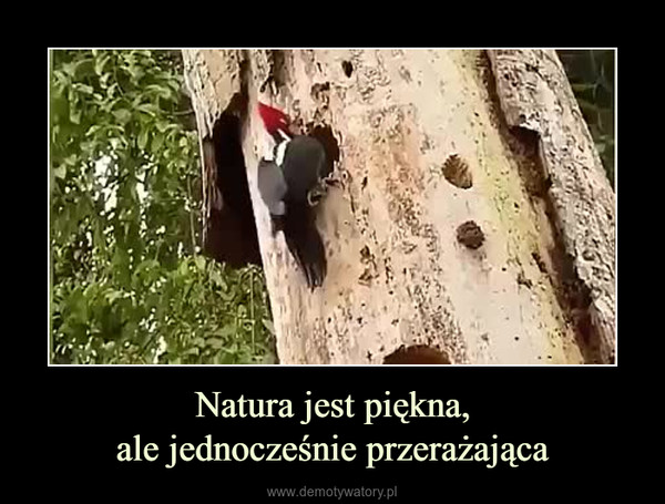 Natura jest piękna,ale jednocześnie przerażająca –