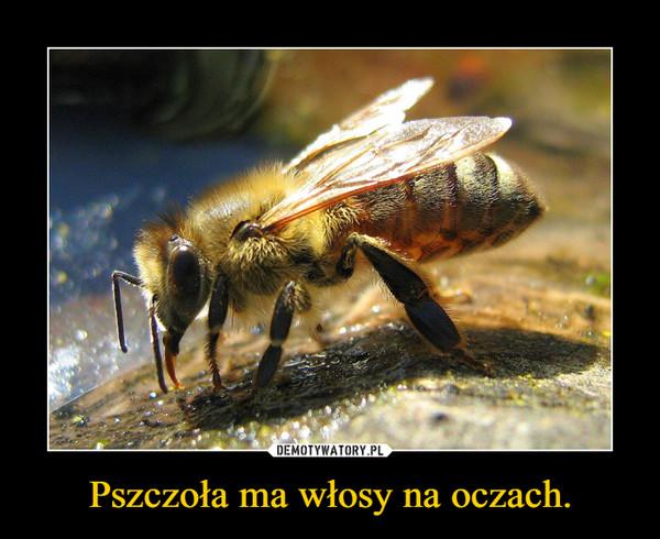 Pszczoła ma włosy na oczach. –