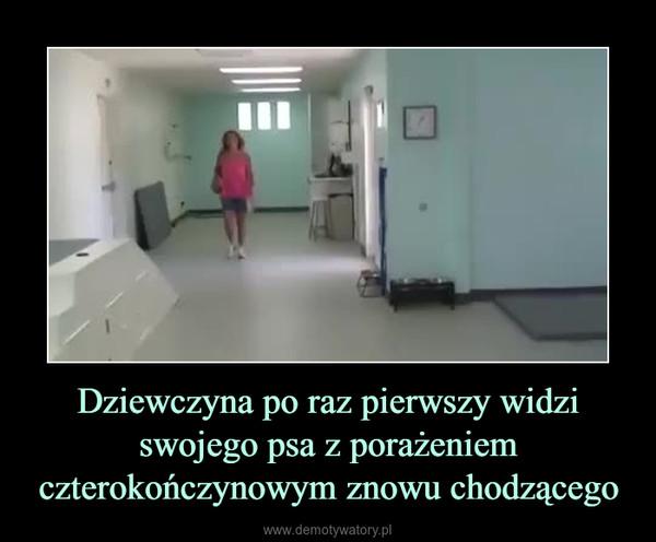 Dziewczyna po raz pierwszy widzi swojego psa z porażeniem czterokończynowym znowu chodzącego –