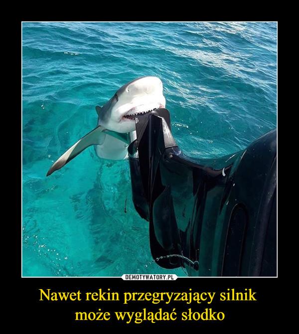 Nawet rekin przegryzający silnik może wyglądać słodko –