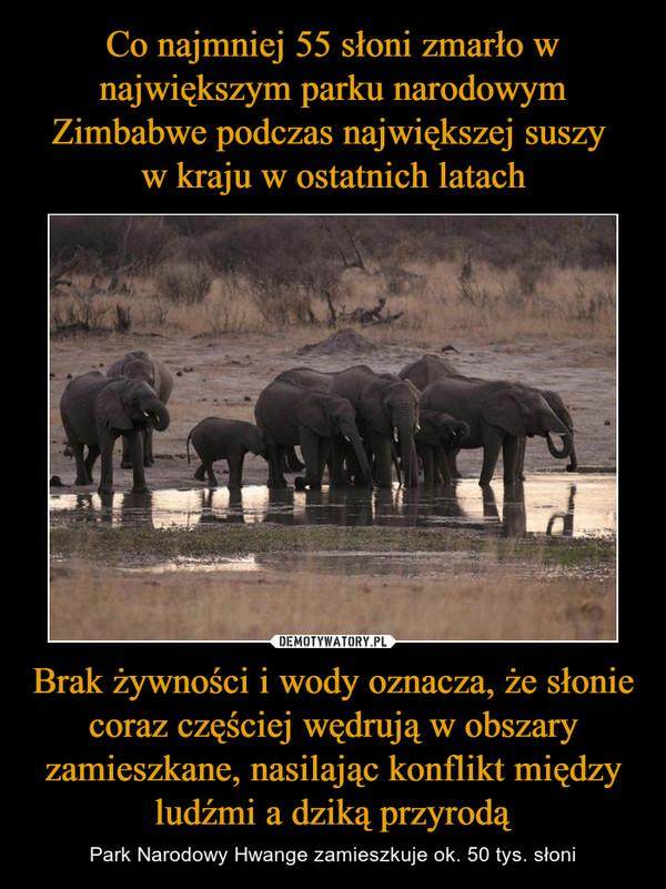 Brak żywności i wody oznacza, że słonie coraz częściej wędrują w obszary zamieszkane, nasilając konflikt między ludźmi a dziką przyrodą – Park Narodowy Hwange zamieszkuje ok. 50 tys. słoni