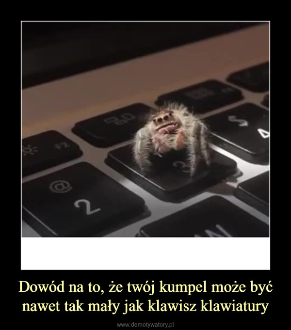 Dowód na to, że twój kumpel może być nawet tak mały jak klawisz klawiatury –