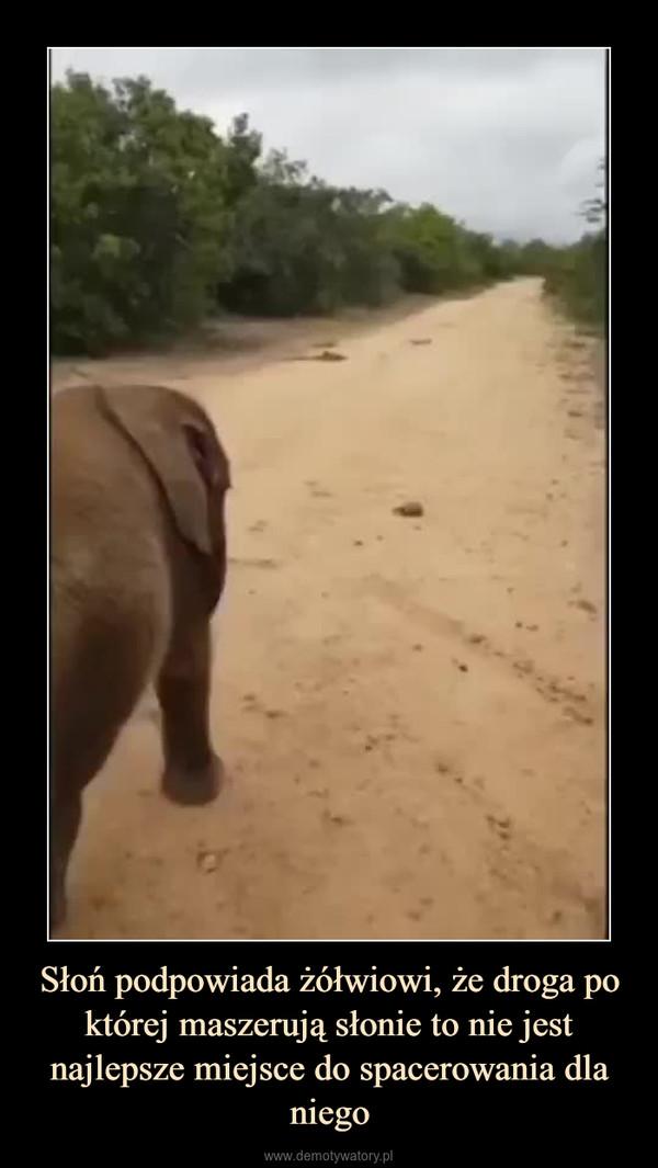 Słoń podpowiada żółwiowi, że droga po której maszerują słonie to nie jest najlepsze miejsce do spacerowania dla niego –