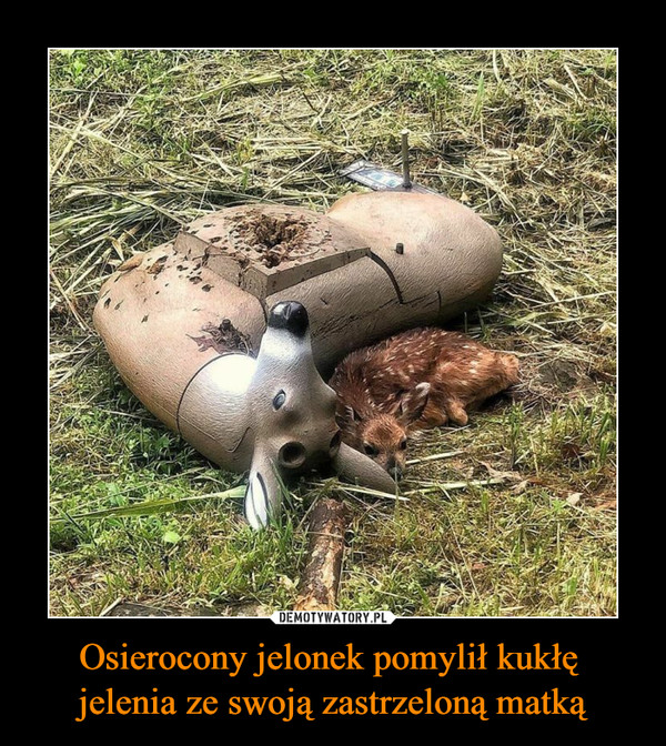 Osierocony jelonek pomylił kukłę jelenia ze swoją zastrzeloną matką –
