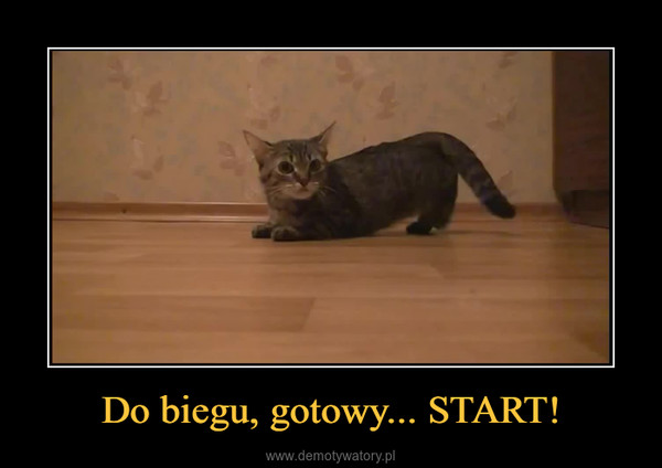 Do biegu, gotowy... START! –