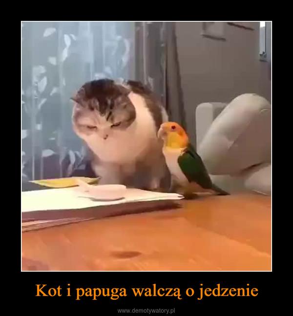 Kot i papuga walczą o jedzenie –