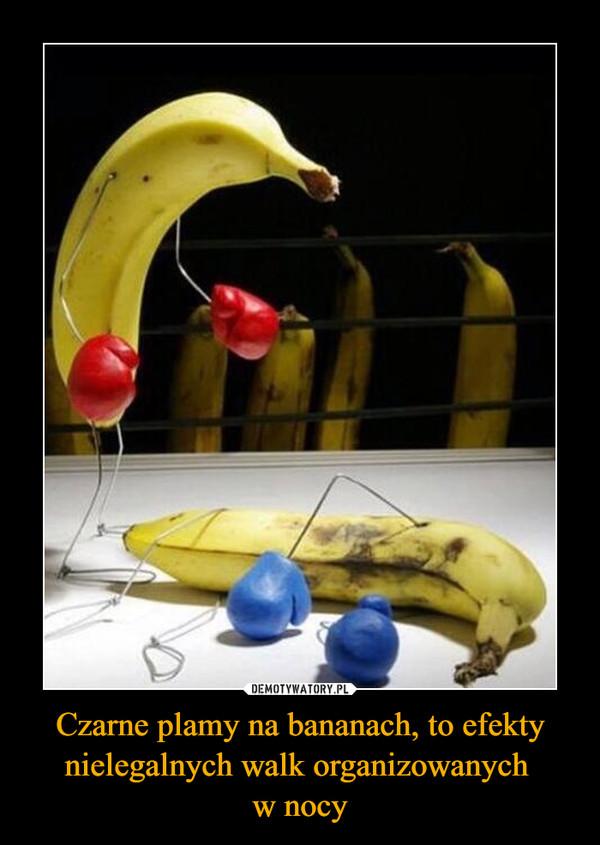Czarne plamy na bananach, to efekty nielegalnych walk organizowanych w nocy –