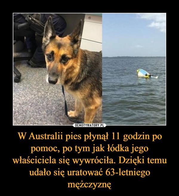 W Australii pies płynął 11 godzin po pomoc, po tym jak łódka jego właściciela się wywróciła. Dzięki temu udało się uratować 63-letniego mężczyznę –