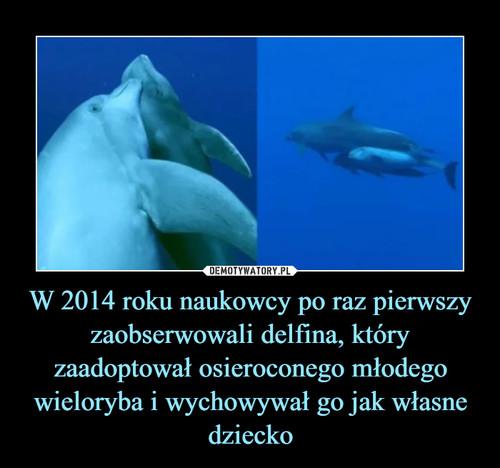 W 2014 roku naukowcy po raz pierwszy zaobserwowali delfina, który zaadoptował osieroconego młodego wieloryba i wychowywał go jak własne dziecko