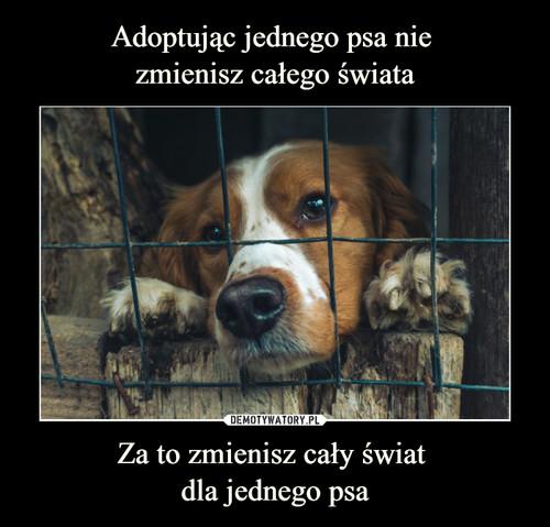 Adoptując jednego psa nie  zmienisz całego świata Za to zmienisz cały świat  dla jednego psa