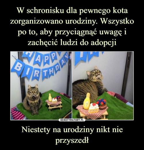 W schronisku dla pewnego kota zorganizowano urodziny. Wszystko po to, aby przyciągnąć uwagę i zachęcić ludzi do adopcji Niestety na urodziny nikt nie przyszedł