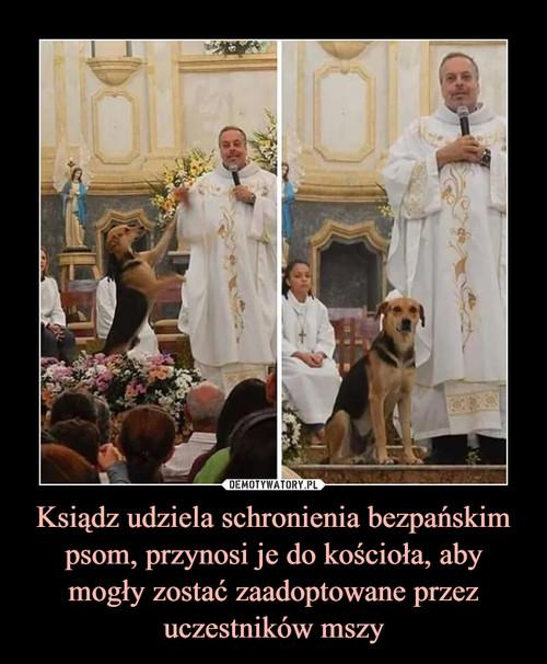 Ksiądz udziela schronienia bezpańskim psom, przynosi je do kościoła, aby mogły zostać zaadoptowane przez uczestników mszy
