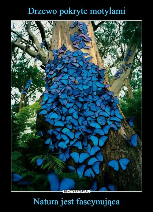 Drzewo pokryte motylami Natura jest fascynująca
