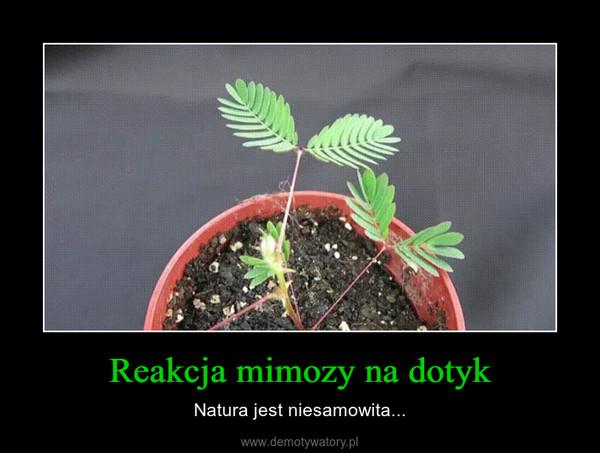 Reakcja mimozy na dotyk – Natura jest niesamowita...