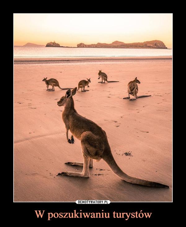 W poszukiwaniu turystów –