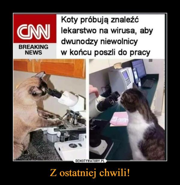 Z ostatniej chwili! –  BREAKING NEWS Koty próbują znaleźć lekarstwo na wirusa, aby dwunodzy niewolnicy w końcu poszli do pracy