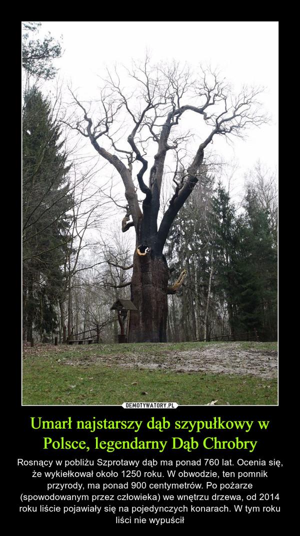 Umarł najstarszy dąb szypułkowy w Polsce, legendarny Dąb Chrobry – Rosnący w pobliżu Szprotawy dąb ma ponad 760 lat. Ocenia się, że wykiełkował około 1250 roku. W obwodzie, ten pomnik przyrody, ma ponad 900 centymetrów. Po pożarze (spowodowanym przez człowieka) we wnętrzu drzewa, od 2014 roku liście pojawiały się na pojedynczych konarach. W tym roku liści nie wypuścił