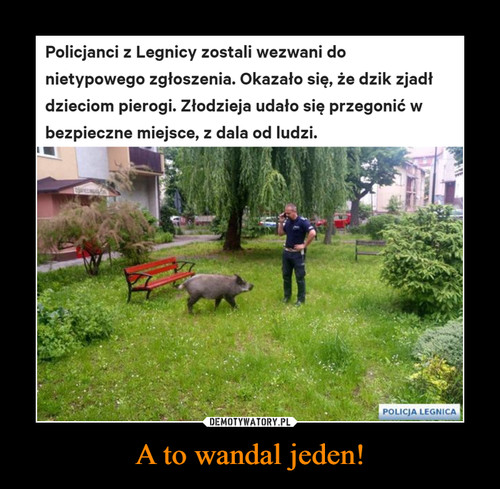 A to wandal jeden!