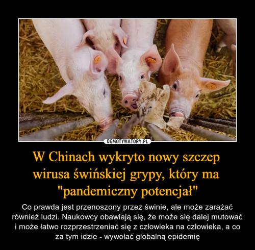 """W Chinach wykryto nowy szczep  wirusa świńskiej grypy, który ma  """"pandemiczny potencjał"""""""