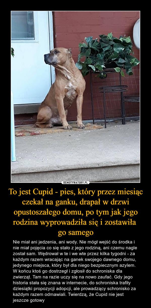 To jest Cupid - pies, który przez miesiąc czekał na ganku, drapał w drzwi opustoszałego domu, po tym jak jego rodzina wyprowadziła się i zostawiła go samego – Nie miał ani jedzenia, ani wody. Nie mógł wejść do środka i nie miał pojęcia co się stało z jego rodziną, ani czemu nagle został sam. Wędrował w te i we wte przez kilka tygodni - za każdym razem wracając na ganek swojego dawnego domu, jedynego miejsca, który był dla niego bezpiecznym azylem. W końcu ktoś go dostrzegł i zgłosił do schroniska dla zwierząt. Tam na razie uczy się na nowo zaufać. Gdy jego historia stała się znana w internecie, do schroniska trafiły dziesiątki propozycji adopcji, ale prowadzący schronisko za każdym razem odmawiali. Twierdzą, że Cupid nie jest jeszcze gotowy