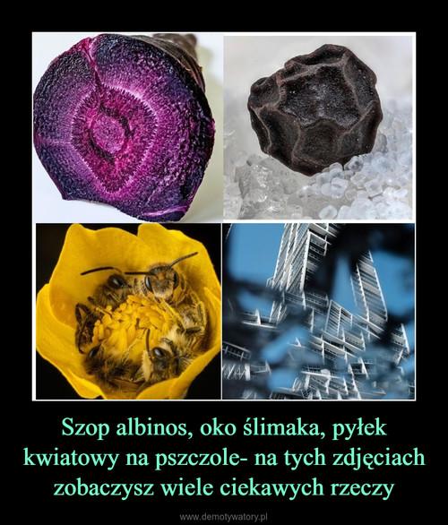 Szop albinos, oko ślimaka, pyłek kwiatowy na pszczole- na tych zdjęciach zobaczysz wiele ciekawych rzeczy