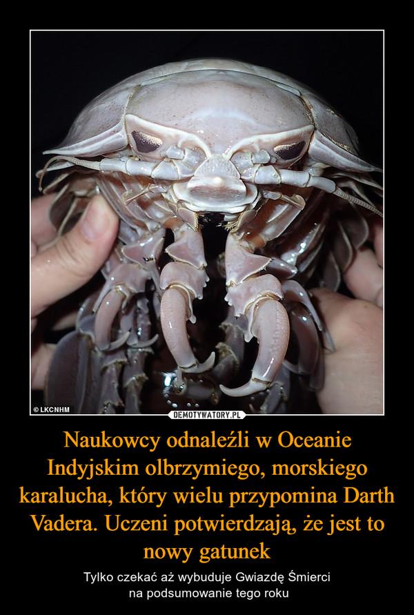 Naukowcy odnaleźli w Oceanie Indyjskim olbrzymiego, morskiego karalucha, który wielu przypomina Darth Vadera. Uczeni potwierdzają, że jest to nowy gatunek – Tylko czekać aż wybuduje Gwiazdę Śmierci na podsumowanie tego roku