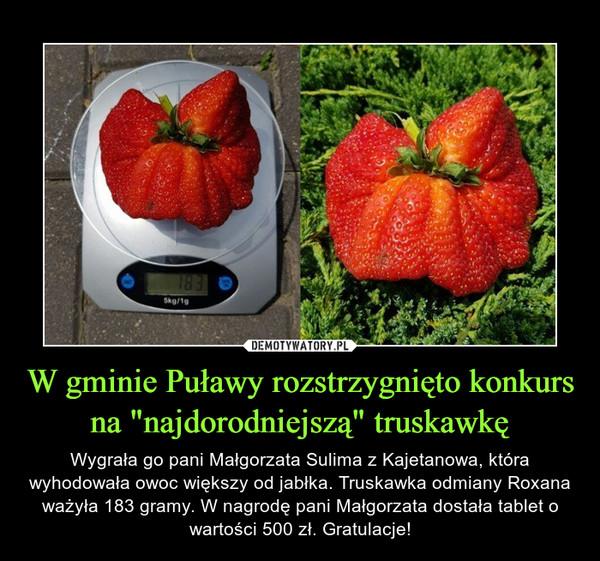 """W gminie Puławy rozstrzygnięto konkurs na """"najdorodniejszą"""" truskawkę – Wygrała go pani Małgorzata Sulima z Kajetanowa, która wyhodowała owoc większy od jabłka. Truskawka odmiany Roxana ważyła 183 gramy. W nagrodę pani Małgorzata dostała tablet o wartości 500 zł. Gratulacje!"""