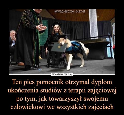 Ten pies pomocnik otrzymał dyplom ukończenia studiów z terapii zajęciowej po tym, jak towarzyszył swojemu człowiekowi we wszystkich zajęciach
