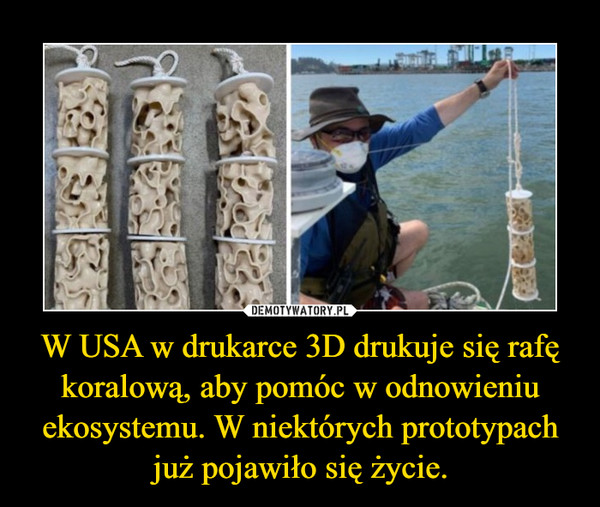 W USA w drukarce 3D drukuje się rafę koralową, aby pomóc w odnowieniu ekosystemu. W niektórych prototypach już pojawiło się życie. –