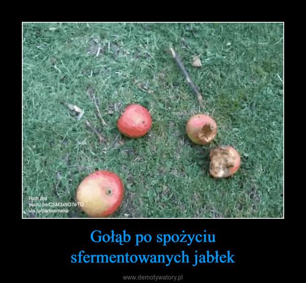Gołąb po spożyciusfermentowanych jabłek –