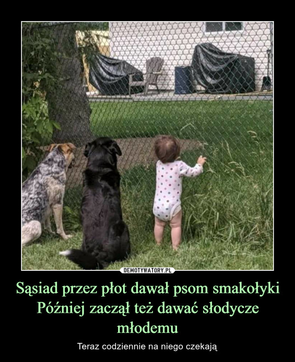 Sąsiad przez płot dawał psom smakołykiPóźniej zaczął też dawać słodycze młodemu – Teraz codziennie na niego czekają