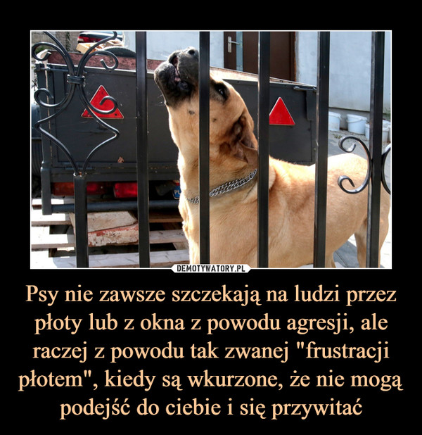 """Psy nie zawsze szczekają na ludzi przez płoty lub z okna z powodu agresji, ale raczej z powodu tak zwanej """"frustracji płotem"""", kiedy są wkurzone, że nie mogą podejść do ciebie i się przywitać –"""