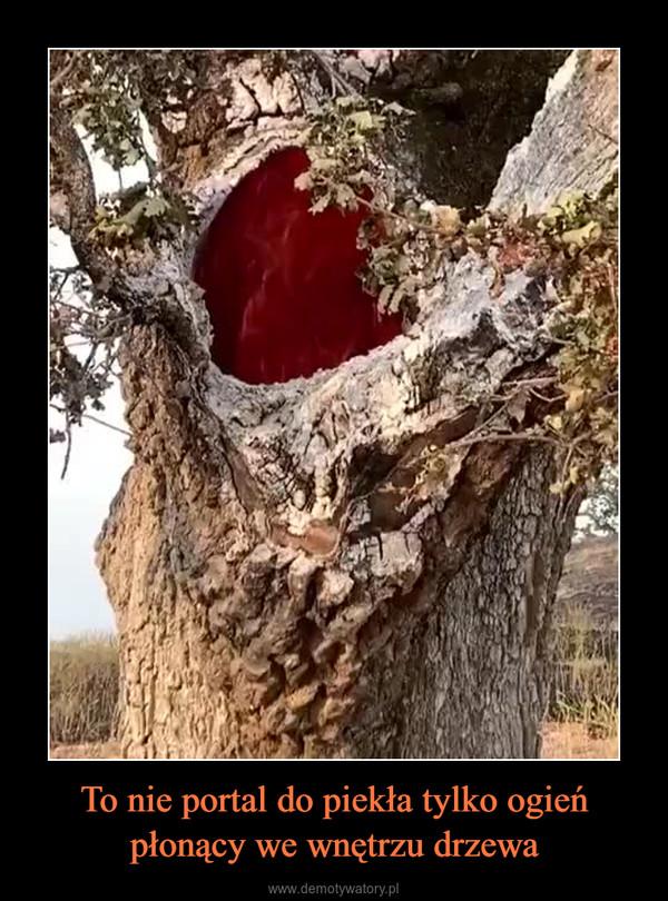 To nie portal do piekła tylko ogień płonący we wnętrzu drzewa –