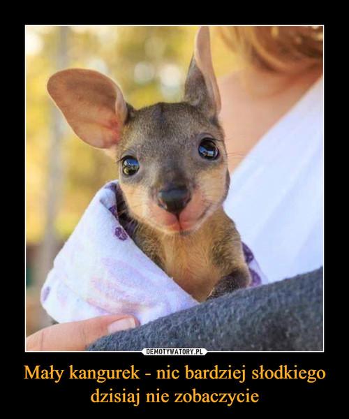 Mały kangurek - nic bardziej słodkiego dzisiaj nie zobaczycie
