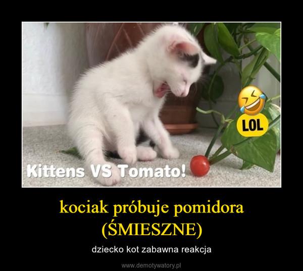 kociak próbuje pomidora (ŚMIESZNE) – dziecko kot zabawna reakcja