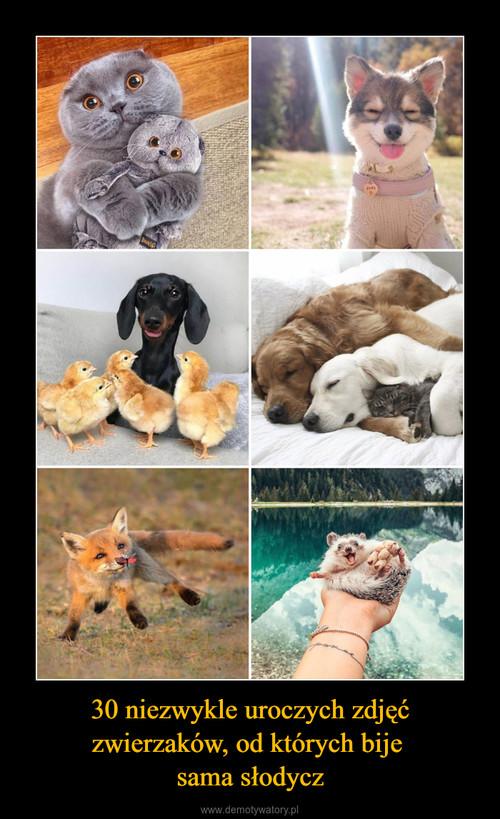 30 niezwykle uroczych zdjęć zwierzaków, od których bije  sama słodycz