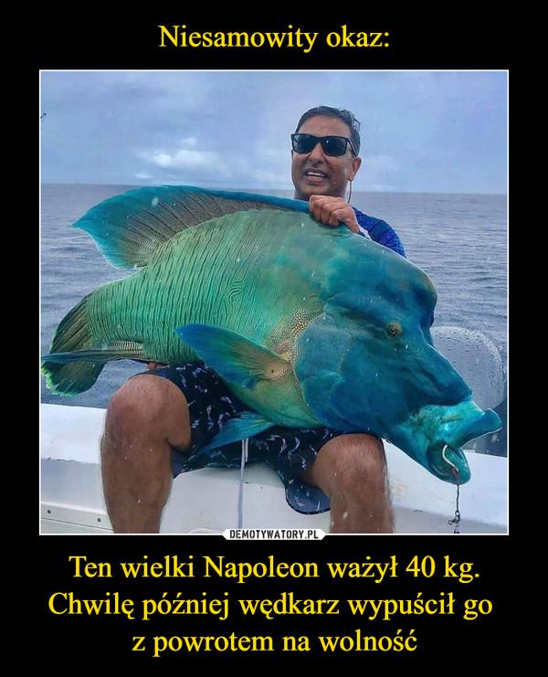 Ten wielki Napoleon ważył 40 kg. Chwilę później wędkarz wypuścił go z powrotem na wolność –