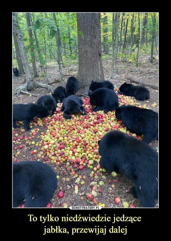 To tylko niedźwiedzie jedzące jabłka, przewijaj dalej –