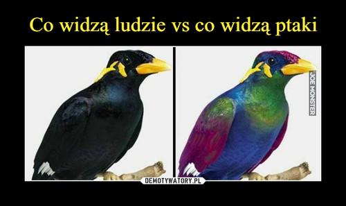 Co widzą ludzie vs co widzą ptaki