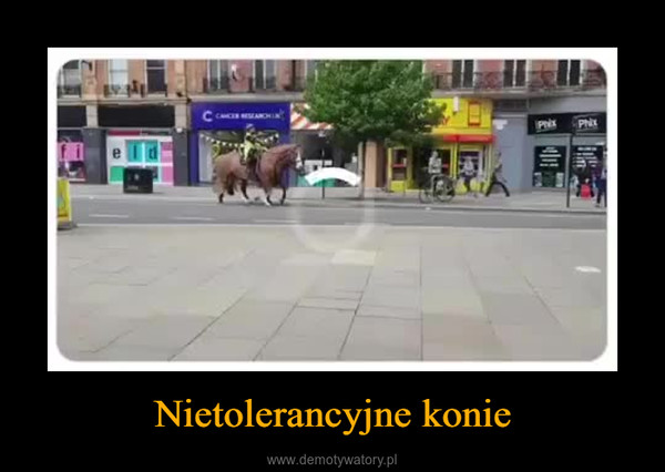Nietolerancyjne konie –