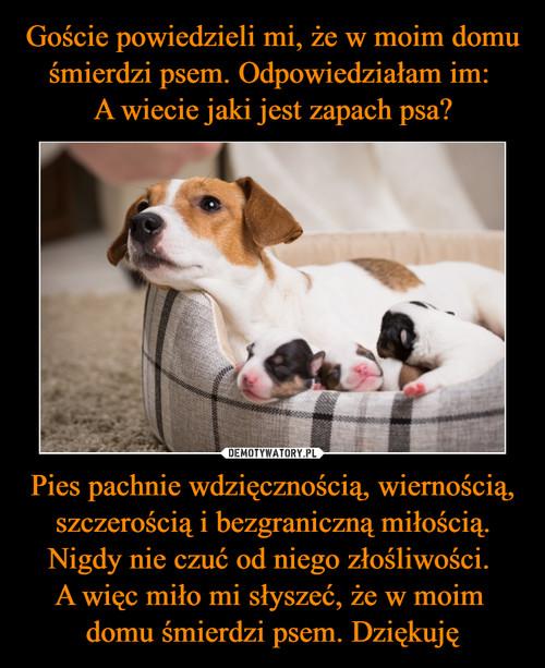 Goście powiedzieli mi, że w moim domu śmierdzi psem. Odpowiedziałam im:  A wiecie jaki jest zapach psa? Pies pachnie wdzięcznością, wiernością, szczerością i bezgraniczną miłością. Nigdy nie czuć od niego złośliwości.  A więc miło mi słyszeć, że w moim  domu śmierdzi psem. Dziękuję